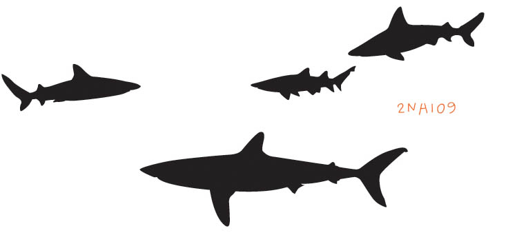 2NA109 - Shark Attack Wall Decal Sticker